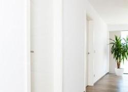 bela notranja vrata na hodniku ob rastlini